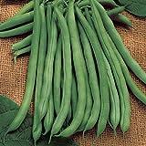David's Garden Seeds Bean Bush Blue Lake 274 SLA3385 (Green) 100 Non-GMO, Heirloom Seeds