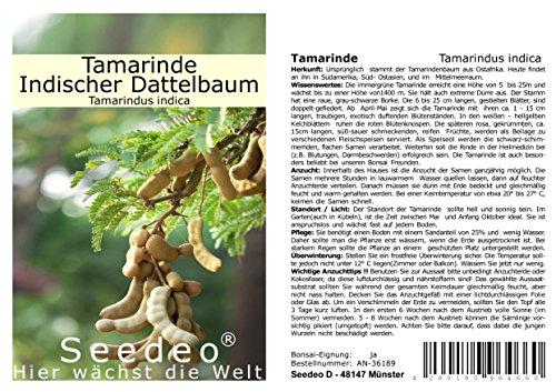 Seedeo® Tamarinde (Tamarindus indica) 6 Samen