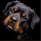 New 5D Diamond Painting Kits for Adults Kids, Awesocrafts Rottweiler Partial Drill DIY Diamond Art Embroidery Paint by Numbers with Diamonds (Rottweiler)