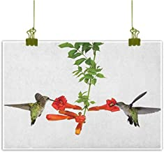 QIAOQIAOLO Retro Oil Painting Hummingbirds Hanging in The Living Room Two Hummingbirds Sipping Nectar from a Trumpet Vine Blossoms Summertime W35 x L24 Red Black Green