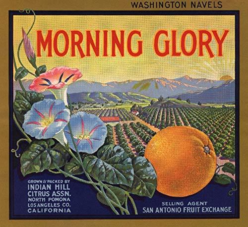 EOPVDS Morning Glory Brand - Pomona, California, etiqueta de caja de cítricos retro de metal letreros divertidos para decoración de pared para bares, restaurantes, cafeterías, pubs de 20,3 x 30,4 cm
