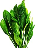 Greenpro 3-Bundles Amazon Sword   Echinodorus Bleheri Live Aquarium Plants Package Aquatic...