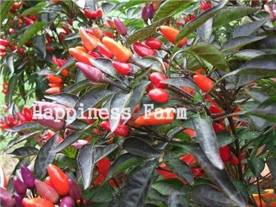 SANHOC Livraison Gratuite 200 pcs Piment légumes Doux de Bell Hot Pepper Bonsai Chilli légumes Paprika Plante pour Jardin Fleur: c
