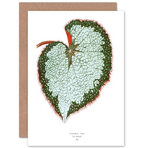 Wee Blue Coo Leaf Begonia Rex Var Grandis wenskaart met envelop binnen Premium kwaliteit