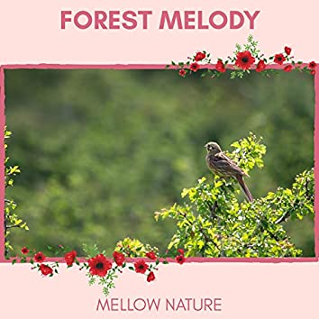 Forest Melody - Mellow Nature