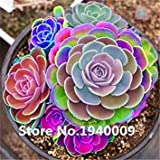 VISA STORE 100pcs seltene Sukkulente seedsseed Mix lithops Bonsai Pseudotruncatella Lig Stein Bonsai Mini Garten Samen Absorption: 1