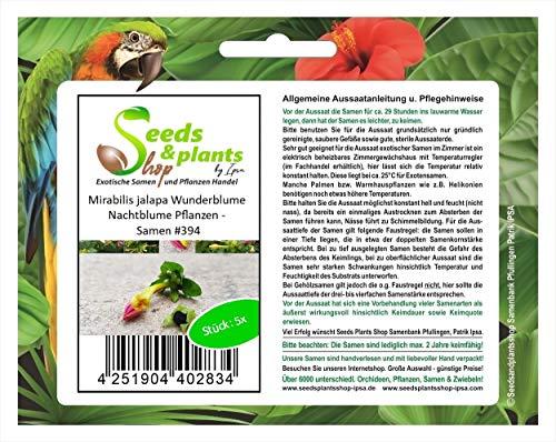 Stk - 5x Mirabilis jalapa Wunderblume Nachtblume Pflanzen - Samen #394 - Seeds Plants Shop Samenbank Pfullingen Patrik Ipsa