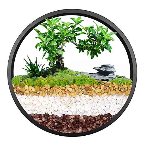 Jarrón colgante de pared, maceta geométrica redonda, soporte metálico para plantas de aire, contenedor vertical para suculentas, cactus y más