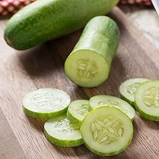 David's Garden Seeds Cucumber Slicing Straight Eight 9515 (Green) 50 Non-GMO, Heirloom Seeds