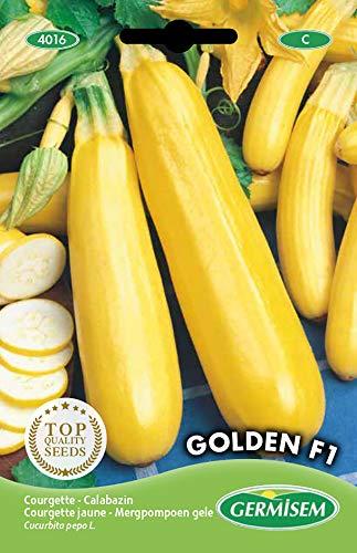 Germisem Golden F1 Semillas de Calabacín Amarillo 2 g, EC4016