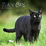 Black Cats 2021 12 x 12 Inch Monthly Square Wall Calendar with Foil Stamped Cover, Animals Cats