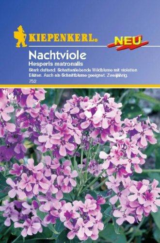 Hesperis matronalis Nachtviole
