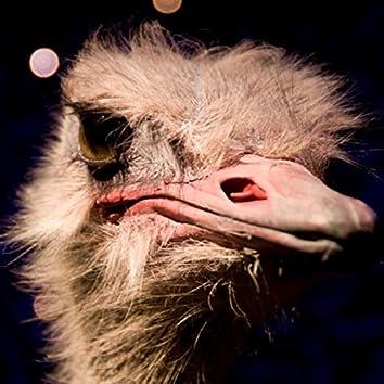 Dead Emu