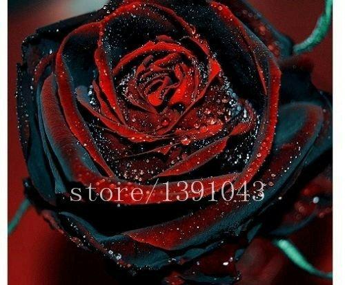 Vente! 100 Pcs / Paquet Graines Jaune Callistephus Chinensis Fleur Balcon pot Bonsai Fleur Aster semences, # 4G995J