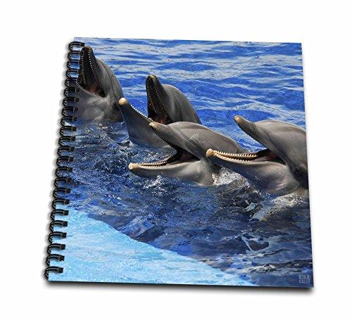 3dRose DB 37749_ 2Vier Delfine auf Oberfläche der Wasser in ozeanographische Aquarium in Valencia, Spanien Memory Book, 12von 12Zoll