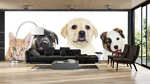 Fotomural Vinilo para Pared Perros y Gato   Fotomural para Paredes   Mural...