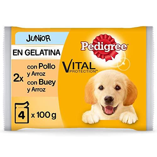 Pedigree Comida húmeda para Perros Junior, Sabor Pollo y Buey con Arroz en Gelatina, Multipack (13 Packs x 4 bolsitas x 100g) ⭐