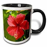 3dRose mug_72200_4'Dominican Republic, Bavaro, Hibiscus flower-CA14 LEN0165 - Lisa S. Engelbrecht' Two Tone Black Mug, 11 oz, Multicolor