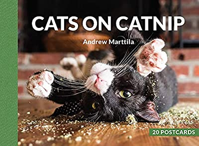 Cats on Catnip: 20 Postcards
