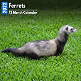 Calendar 2022 Ferrets: Cute Ferret Photos Mini Calendar a Monthly Square Book Planner With Inspirational Quotes each Month
