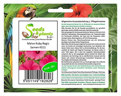 Stk - 30x Malve Ruby Regis - Bechermalve Samen Garten Blumen Saatgut KS11 - Seeds Plants Shop Samenbank Pfullingen Patrik Ipsa