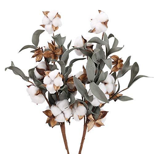 DWANCE 2 Pcs Ramo de Flores Secas de Natural Algodón con Cáscara de algodón DIY Tallos de algodón Flores Secas para Decoración del Hogar Bodas Fiestas Oficinas Restaurantes