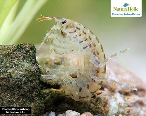 NatureHolic Lebendfutter Marine Flohkrebse - Gammarus oceanicus