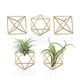 Mkono 5 Packs Air Plant Holder Mini Metal Tabletop Himmeli Decor Modern Geometric Planter Tillandsia Air Fern Display Stand with Each Side 2.6' Long for Home, Office and Wedding Gift Idea, Gold