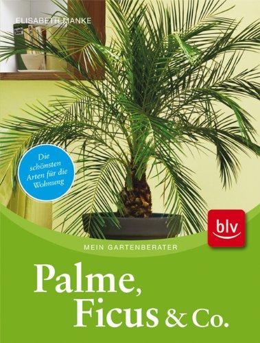 Palme, Ficus und Co.: Die schnsten Arten fr die Wohnung