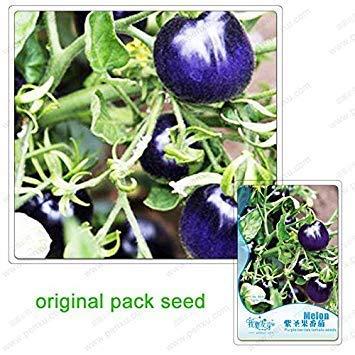 Potseed 25 Samen/Pack, Lila heiliges Obst Tomate, Lila Tomaten-Samen, Obst und Bio-Gemüse, Topfpflanzen