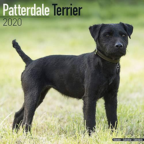 Patterdale Terrier Calendar 2020