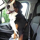Hunde-Anschnall-Gurt inkl. extra gesichertem Profi-System-Karabiner   Hochwertiger Chrom-Schließhaken   Sicherheits-Gurt mit integrierter Ruck-Dämpfung   Perfekter Autogurt-Adapter   Pets'nDogs - 9