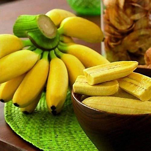 Semillas de plátano, 1 bolsa Semilla de plátano Semilla dulce de alta tasa de germinación Semilla de planta casera fresca para plantar jardín al aire libre