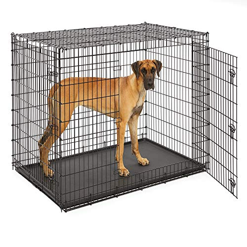 Midwest 'Ginormus' Double Door Dog Crate
