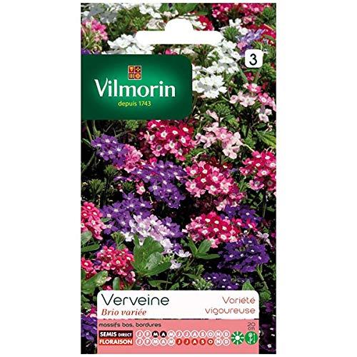 Vilmorin - Sachet graines Verveine Brio variée
