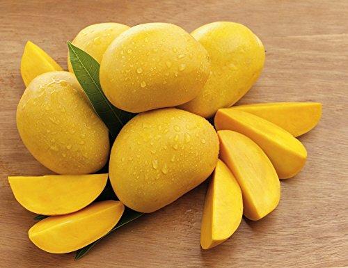 パキスタン産マンゴー 約5kg 10〜20玉入り レギュラーサイズ 生鮮 チョウサ種またはホワイトチョウサ種
