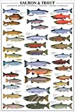 Educational Salmon and Trout - Forellen und Lachse Bildung