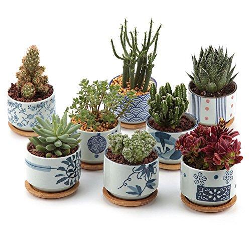 T4U 7.5CM Keramik Sukkulenten Töpfe Kaktus Pflanze Töpfe Mini Blumentöpfe Japanische Stil Serie 8 Stücke Set