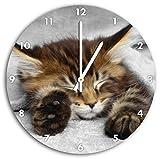 Stil.Zeit schlafende Katze mit großen Ohren schwarz/weiß,