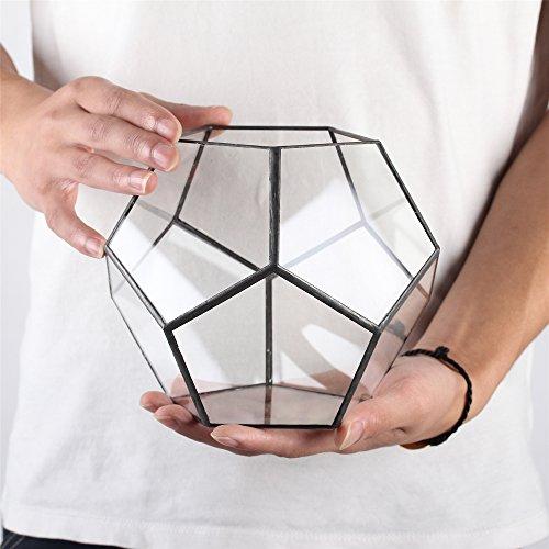 Transparentes fünfeckiges Dodekaeder Glas, Terrarium, auch für Sukkulenten , farblos, Schwarz - 6