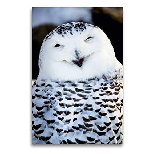Premium textiel canvas 60 cm x 90 cm hoog, Alle keer lachen - Sneeuwuil met zwart-wit Geeft lijkt te glimlachen | Muurschildering op (Bubo scandiacus), Japan (CALVENDO dieren);CALVENDO dieren