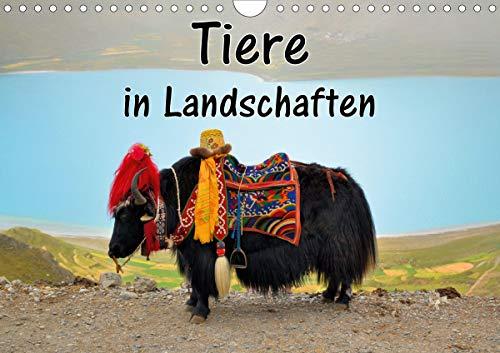 Tiere in Landschaften (Wandkalender 2020 DIN A4 quer)