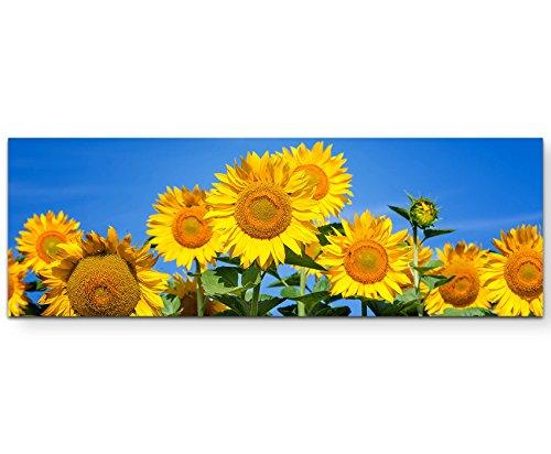 Paul Sinus Art Leinwandbilder | Bilder Leinwand 120x40cm blühende Sonnenblumen