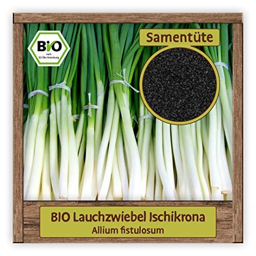 BIO Lauch Samen Sorte Ischikrona (Allium fistulosum) Gemüsesamen Lauch-Zwiebel Saatgut