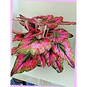 Artificial 16″ Pink Begonia Plant Silk Floral Flowers Bouquet Realistic Flower Arrangements Craft Art Decor Plant for Party Home Wedding Decoration