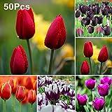 Ukallaite Lot de 50 bulbes de tulipes pour plantes de jardin Rouge