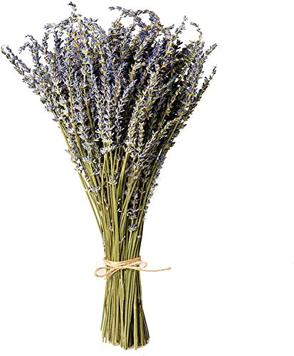 Fciqven Lavender Dried Flowers, 180-200 Stems 100% Natural Dried Lavender for Home Decoration, Home Fragrance, Photo Props, Handmade Soap Flowers