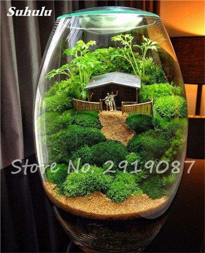 100 Pcs rares mousse verte Graines exotiques Graines Bonsai Moss Belle Moss Boule décorative Jardin créatif herbe Graines Plante en pot 10