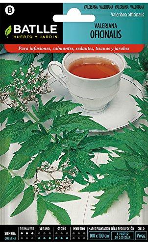 Semillas Aromáticas - Valeriana officinalis - Batlle