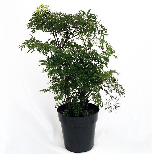 Best indoor medicinal plants